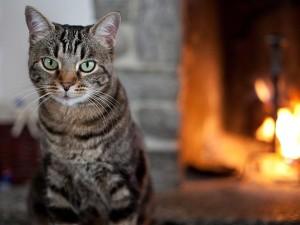 Catspetfinder